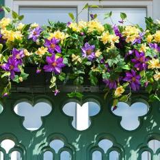Цветы на балконе, КП Трувиль